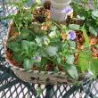 Thrift store bowl with hole drilled in center for patio table umbrella to go through. Added flowers for nice centerpiece.